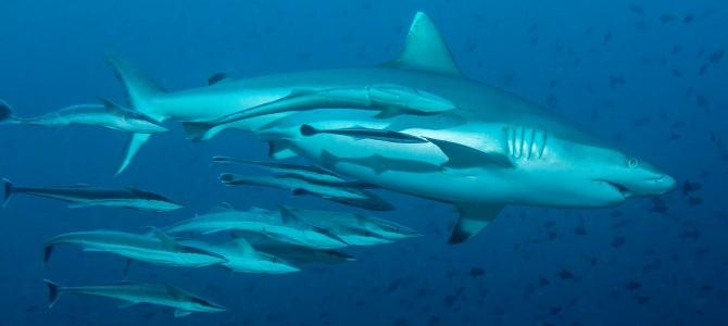 Malediven – Nautilus one 2015