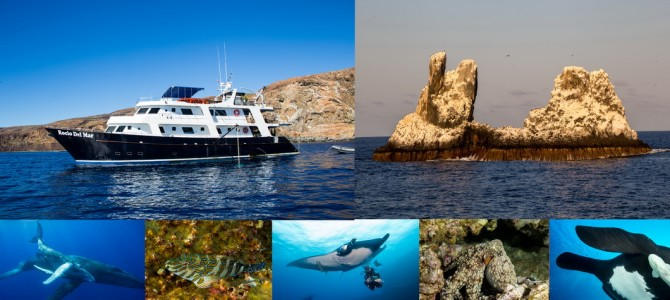 Mexiko – Tauchsafari   Socorro      5 – 17 Feb 2017