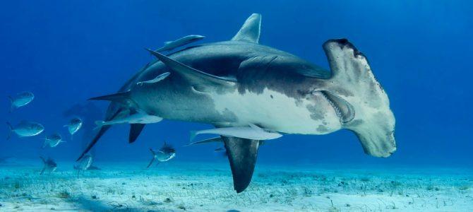 Haitauchen Bahamas 2020